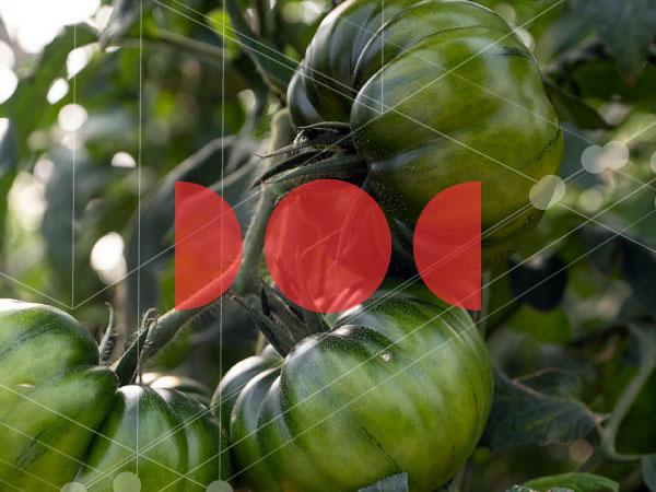 doctorado agricultura protegida